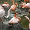 Look closely at faces of Flamingo's!!